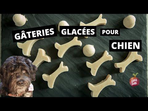 gÂteries-glacÉes-pour-chien-🐕-beurre-d'arachides,-banane-et-yogourt-la-petite-bette