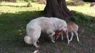 Big Dog Little Horse