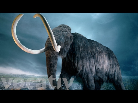 Scientists Have  A Plan To Bring Back Woolly Mammoths