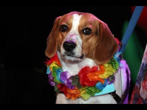 Ottawa Humane Society Garden Party raises $96K for animal welfare
