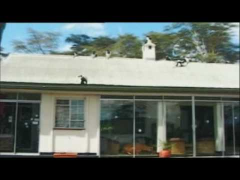 S Club 7  S Club 7 Go Wild!  Paul In Kenya Episode 1  Part Three