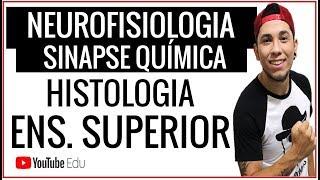 Neurofisiologia I SINAPSE QUÍMICA l Sistema Nervoso * AULA ESPECIAL