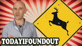 Do Road Hazard Signs Like Deer Crossing and Falling Rocks Actually Prevent Accidents Mp3