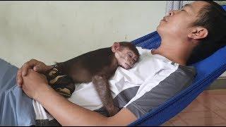 Baby Monkey | Sleep Time Of Monkey Doo And Daddy | Doo Loves Daddy