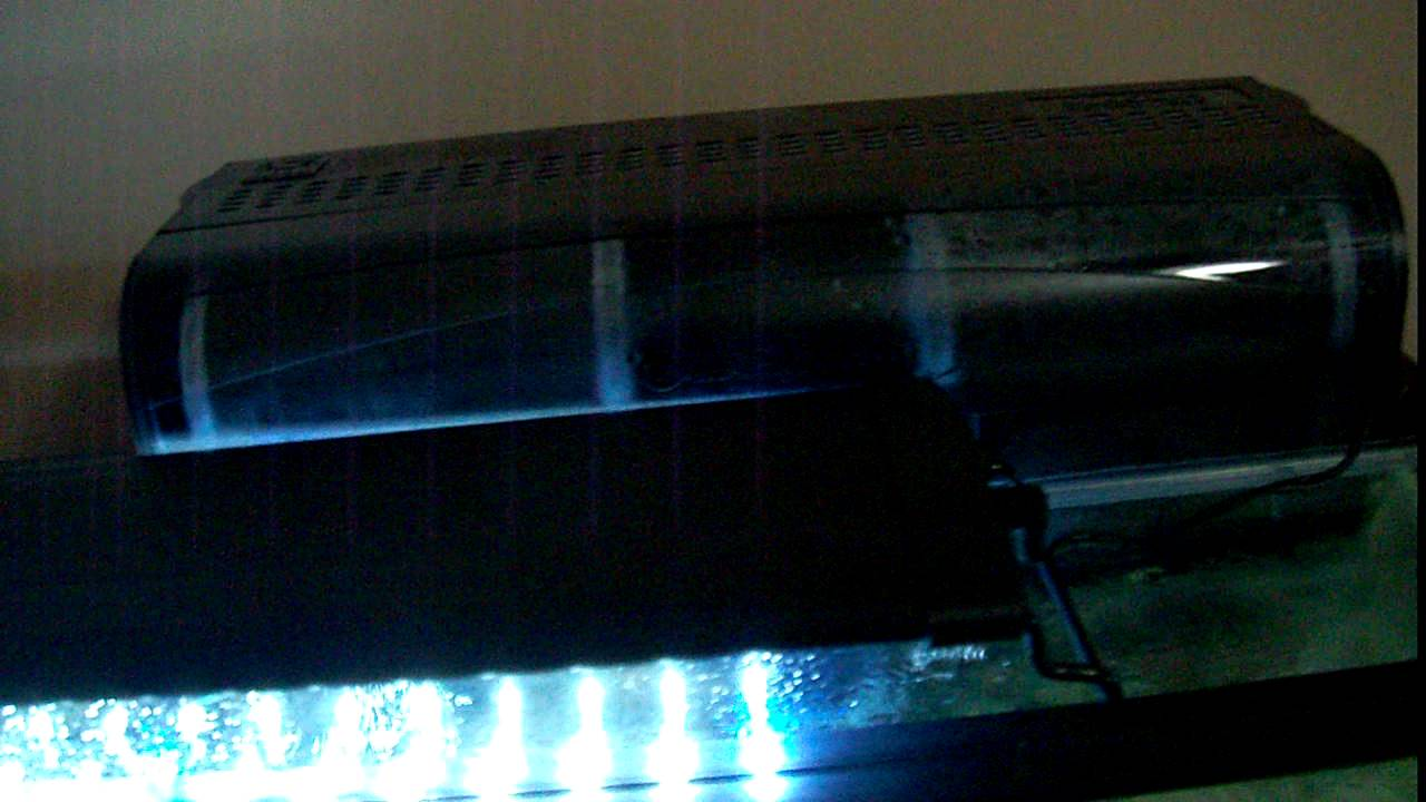 & 55 Gallon Aquarium w/ Glass Canopy and LED Light - YouTube