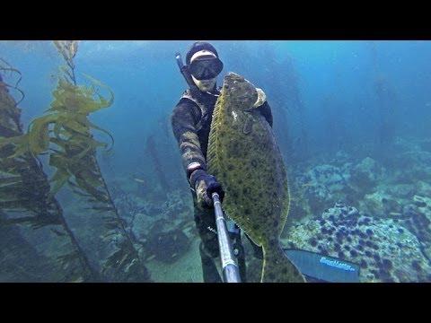 Spearfishing California -Trophy Halibut