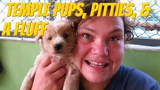 Tiny Rescue Puppies With Fleas and Lice - Cute Thai Pitty Pups