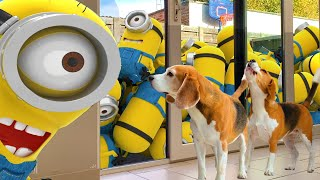 Best Video: Minions Animation In Real Life.