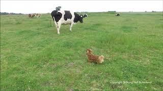 Wo sich Rind, Hund und Hase Gute Nacht sagen