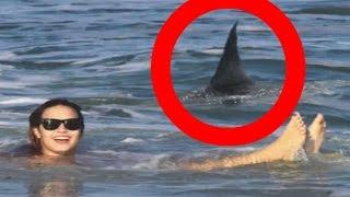 Top 7 Worst Shark Attacks In History | Ollie Langdon