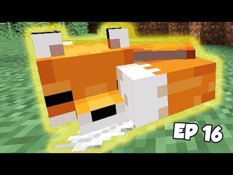 Minecraft Survie : J&39;ai Capturé Un RENARD en 114 - Ep 16 Fr