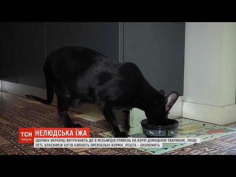 Котяча їжа: чим