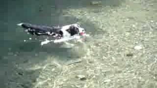 ミディは泳ぐのが大好きです.