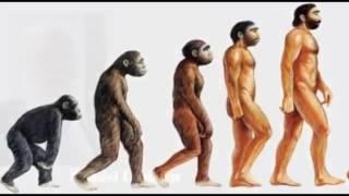 Evolutionary Absurdity Against Naturalism