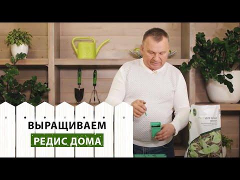 Вопрос: Можно ли сажать редис на подоконнике для еды Вырастет ли урожай?