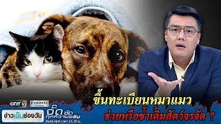 ขึ้นทะเบียนหมาแมว ช่วยหรือซ้ำเติมสัตว์จรจัด ? | จั๊ด ซัดทุกความจริง | ข่าวช่องวัน | one31