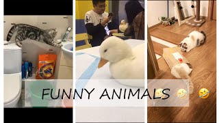 Funny Animals Compilation 2019 (LAUGH DECADE LESS) /Ep.03