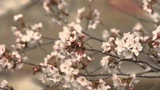 佐良直美 - いのちの木陰