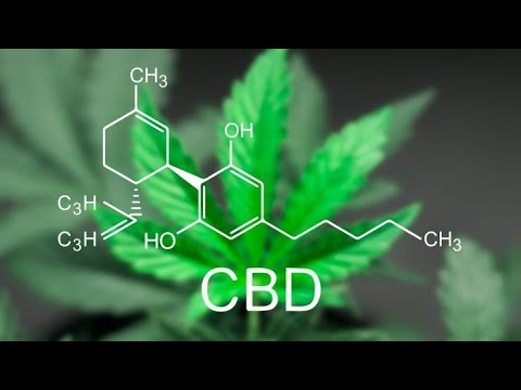 How Long Does CBD Stay In Your System? ( Vaping Daily ) Vape Discussion Review