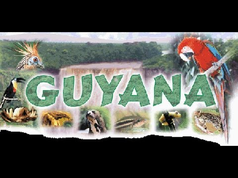 Guyanese American Chamber of Commerce  ribbon cutting ceremony  April 22 part 4