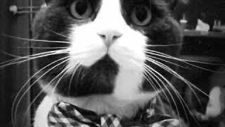 Кот меняет цвет🤗