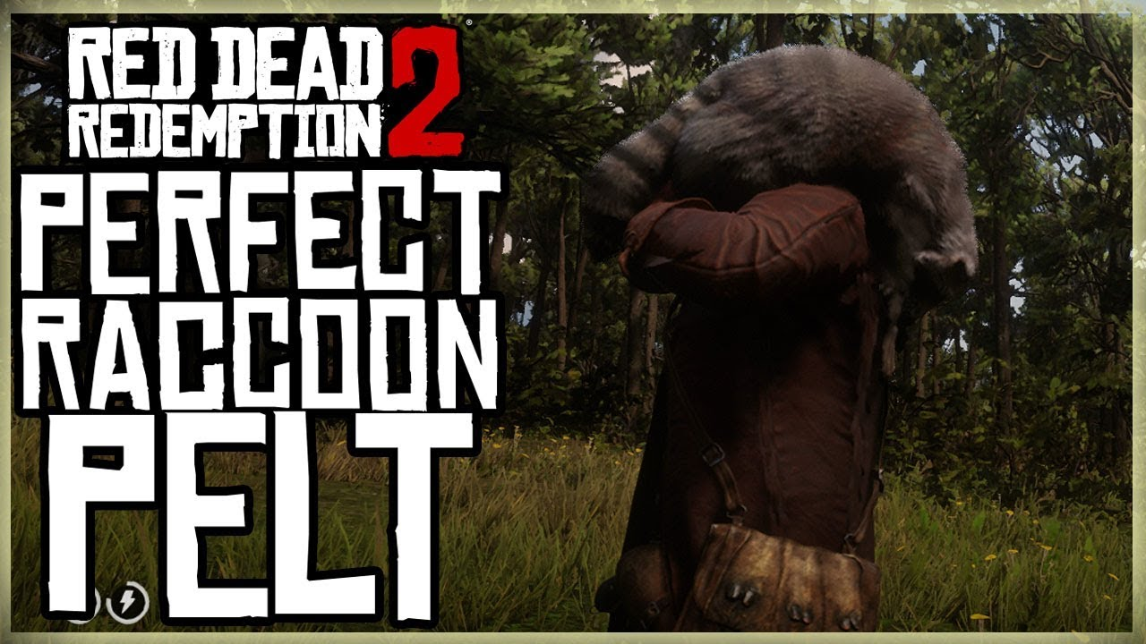 a9add3ea406 HOW TO GET A PERFECT RACCOON PELT - RED DEAD REDEMPTION 2 PRISTINE RACOON  HUNT