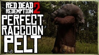 HOW TO GET A PERFECT RACCOON PELT - RED DEAD REDEMPTION 2 PRISTINE RACOON HUNT