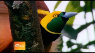 bbc knowledge expedition new guinea promo south africa