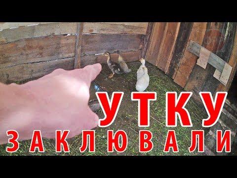 про село - ЗАКЛЮВАЛИ УТКУ / сельхоз-влог / переезд в деревню / ЛПХ / КФХ / все в деревню
