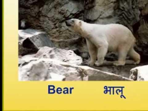 Short essay on the Wild Animals of India