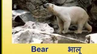 Cheeni For Tots - Learn Wild Animal Names in Hindi