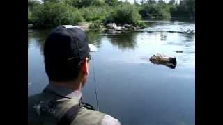 Особенности нахлыстовой рыбалки: ловим головля.