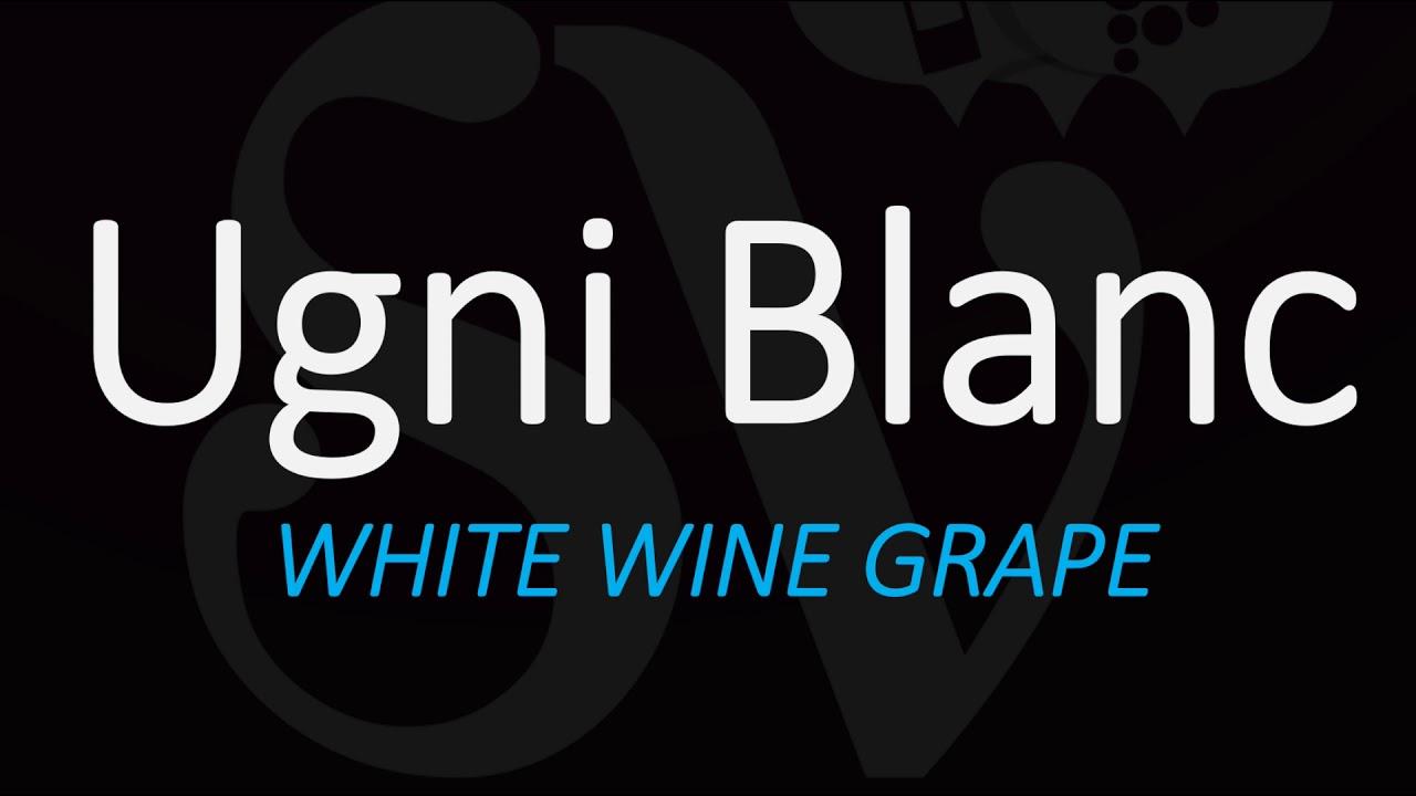 How to Pronounce Ugni Blanc? The Grape behind Cognac & Armagnac