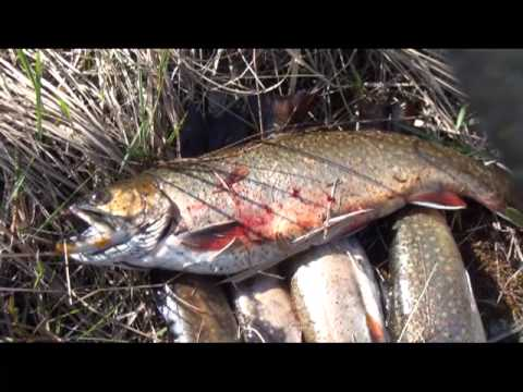 Epic Hike For Spring Sea Run Brook Trout In Land On The Fly