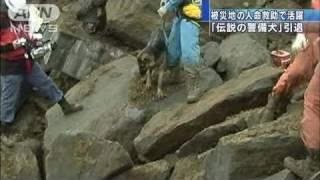 被災地で人命救助にあたる警視庁の警備犬のなかで、「伝説」の1匹が引退...
