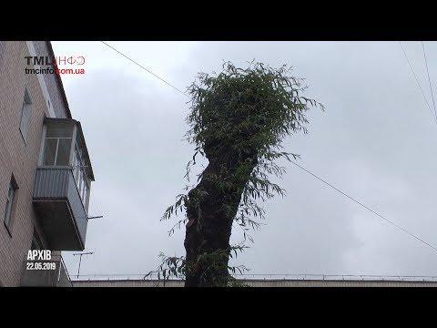 ТМЦ.інфо Тернопільський Медіа Центр: У міськраді вирішили зрізати ще одне дерево у Тернополі