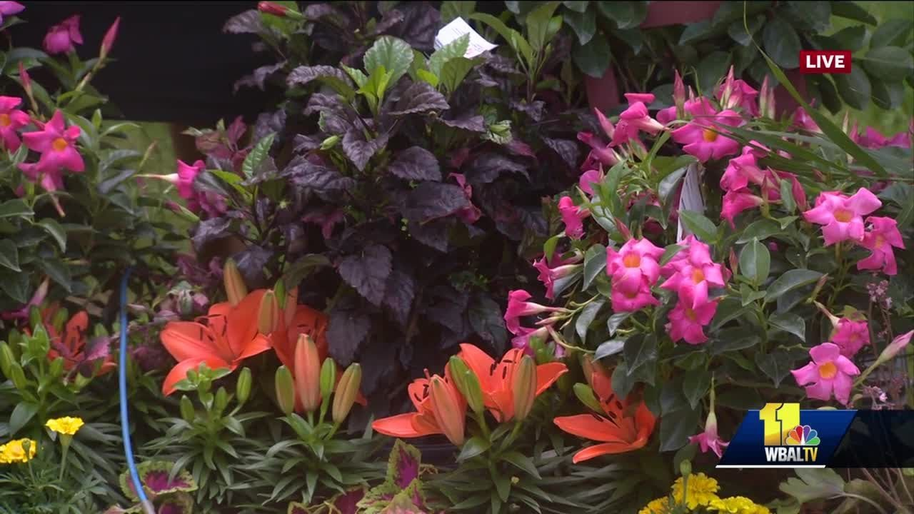 Bell Nursery Home Depot Shows Variety Of Plants Youtube