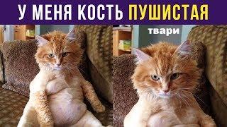 Приколы с котами. У меня кость пушистая  Мемозг 96