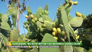 Bu Hafta İzmir / Arıkbaşı'ndayız. Hayat Kırsalda Güzel / Çiftçi TV