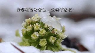 混声三部合唱 「ふきのとう」 作詩/門倉さとし 作曲/佐々木信綱 こん...