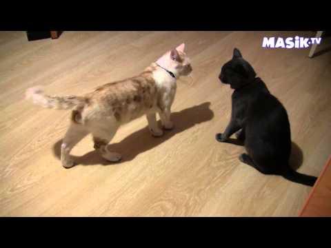 смешные котята играют - Большая подборка ТОЛЬКО