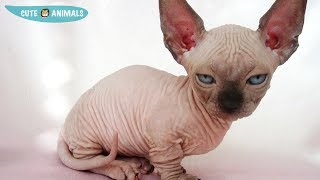 Cutest Cats and Kittens Compilation 2019 | Best Cute Cat Videos Ever