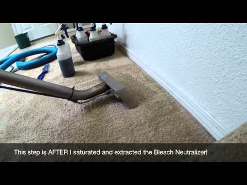 carpet-repair---spot-dyeing