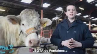 Clip Vidéo TNLA 2017 Fontaines 71150