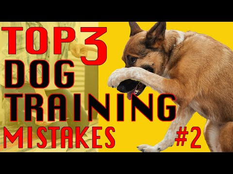 3 Big MISTAKES in Dog Training and How to AVOID Them #2 -  DOWN from SIT