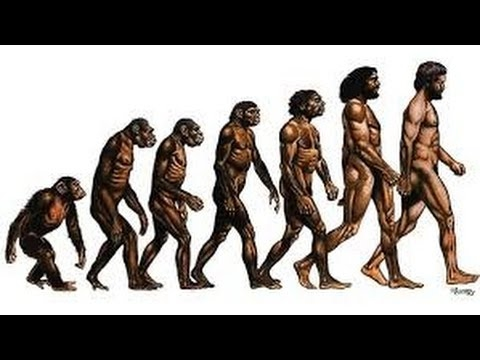 Human Evolution - Documentary