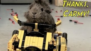 To the Guineacycle!