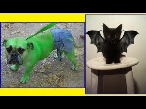 Amazing Engineering/Technical  100+ Terrifyingly Cute Halloween Costumes For Pets