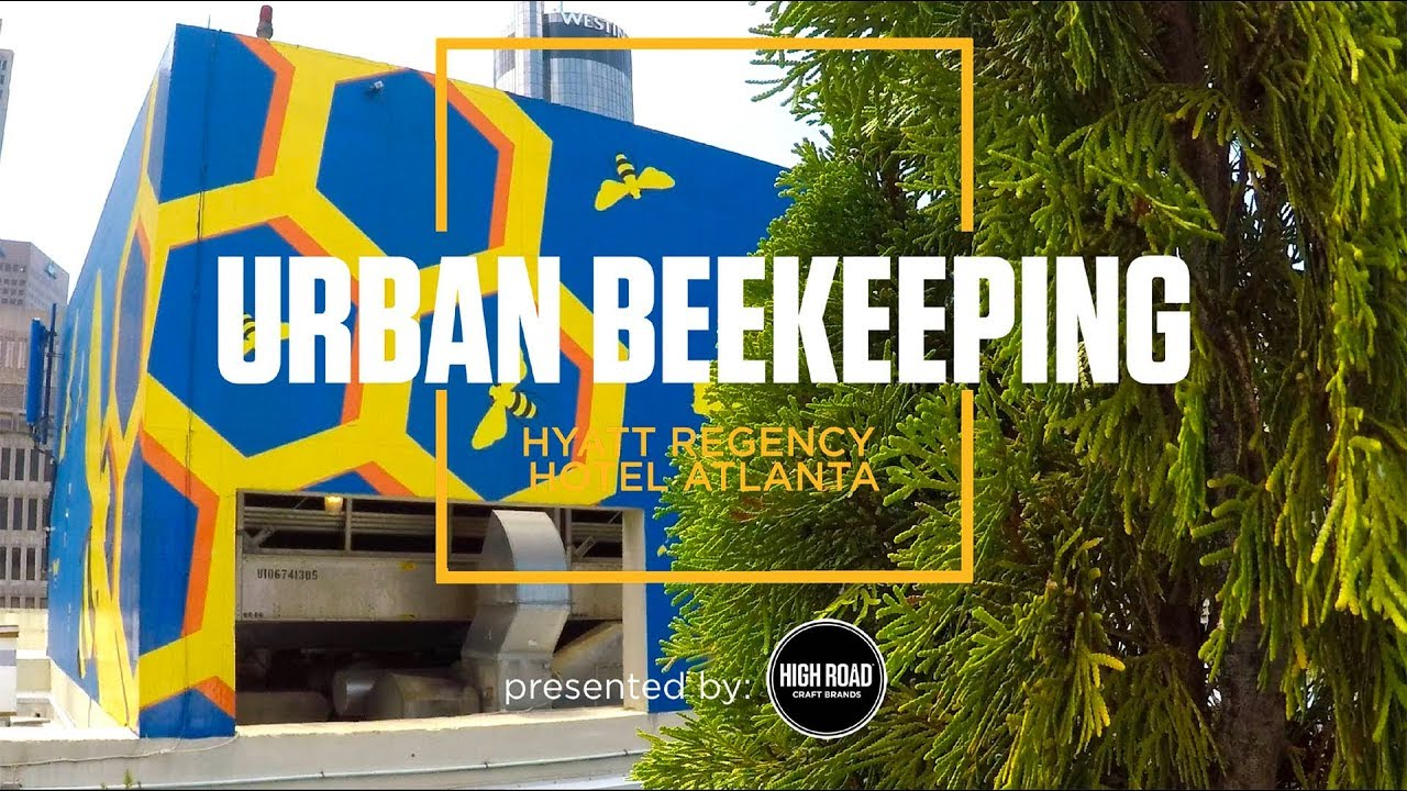 Chef Stories: Urban Beekeeping. Chef Thomas McKeown Atlanta.
