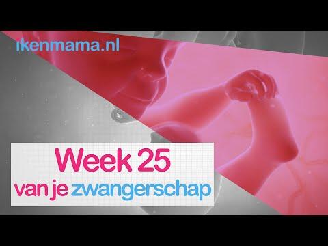 25 Weken Zwanger Zwangerschap Week 25 Ikenmama Nl